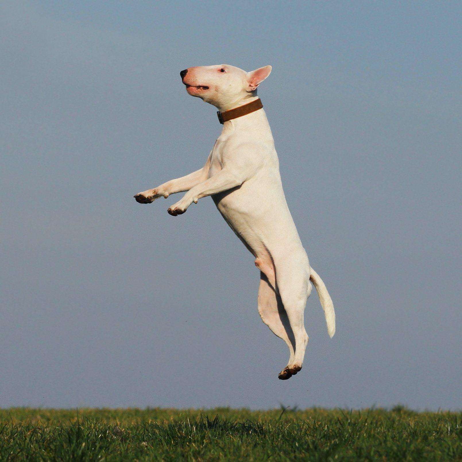dog-1252071